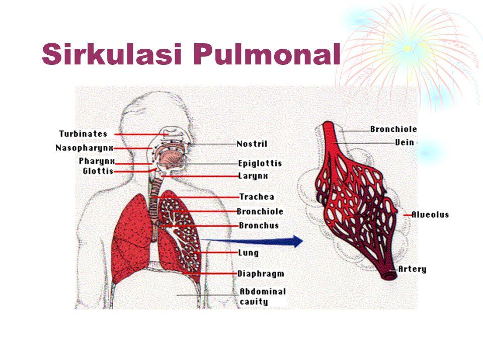 Sirkulasi Pulmonal