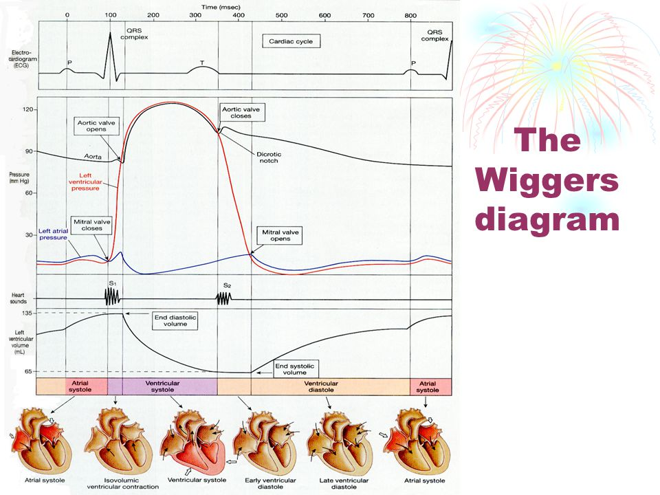The Wiggers diagram