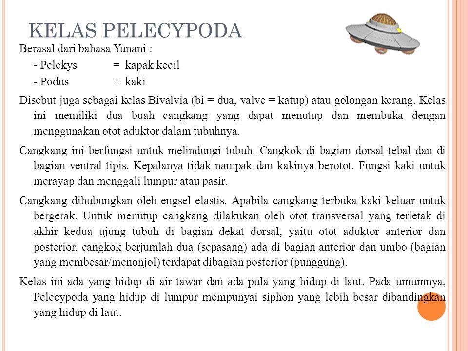 KELAS PELECYPODA