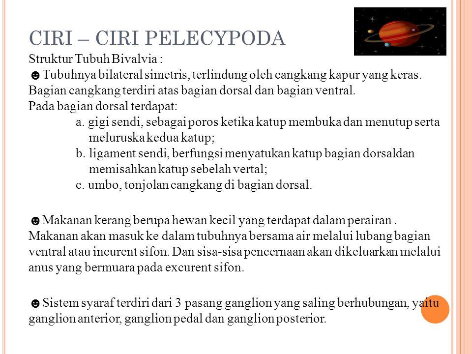 CIRI – CIRI PELECYPODA