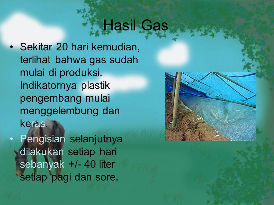 Hasil Gas Sekitar 20 hari kemudian, terlihat bahwa gas sudah mulai di produksi. Indikatornya plastik pengembang mulai menggelembung dan keras.