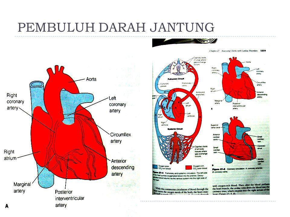 PEMBULUH DARAH JANTUNG