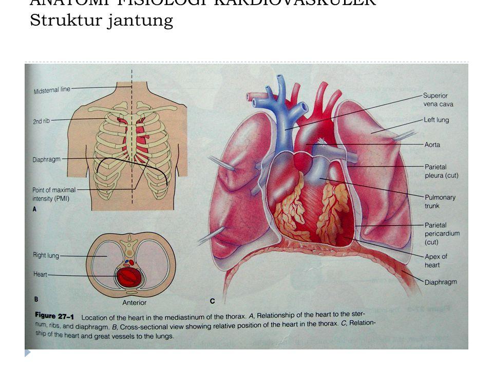 ANATOMI FISIOLOGI KARDIOVASKULER Struktur jantung