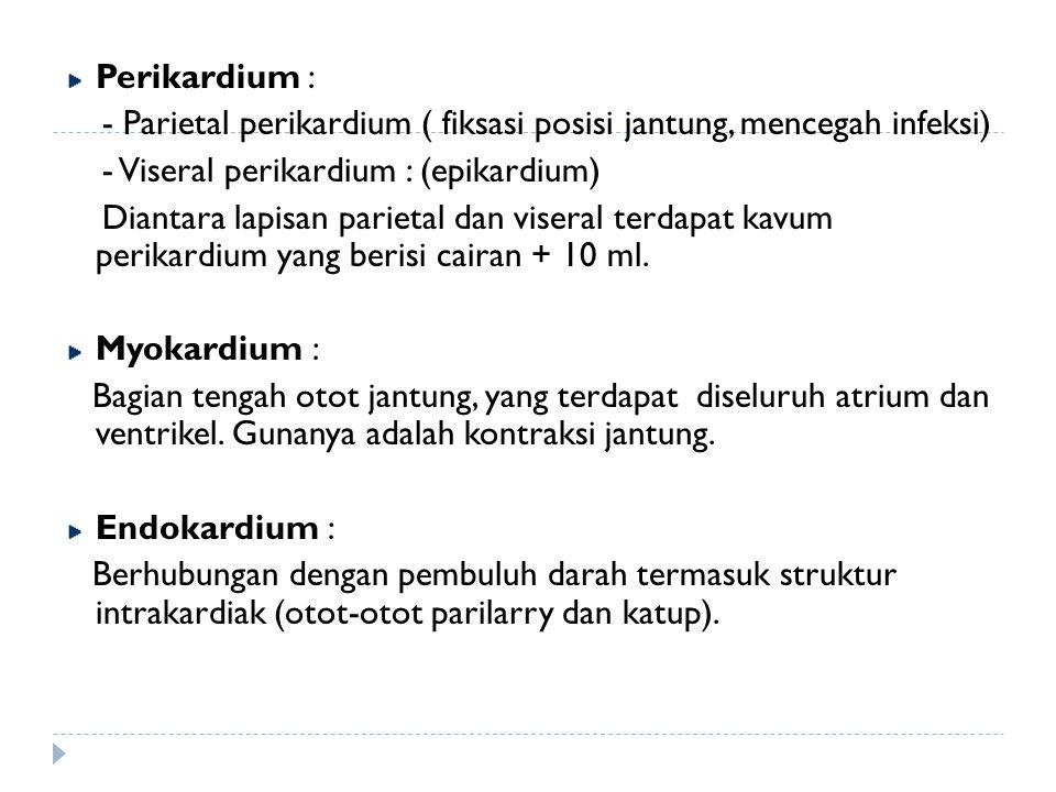Perikardium : - Parietal perikardium ( fiksasi posisi jantung, mencegah infeksi) - Viseral perikardium : (epikardium)
