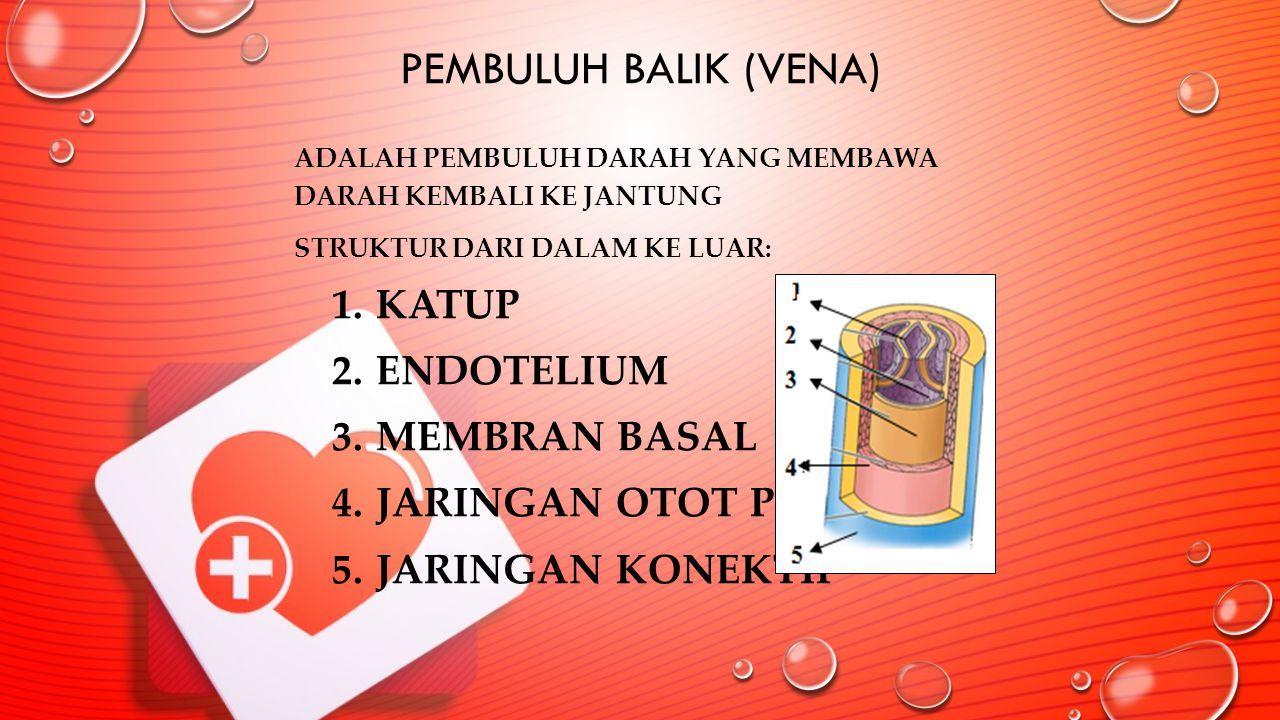 Pembuluh Balik (Vena) Katup Endotelium Membran basal