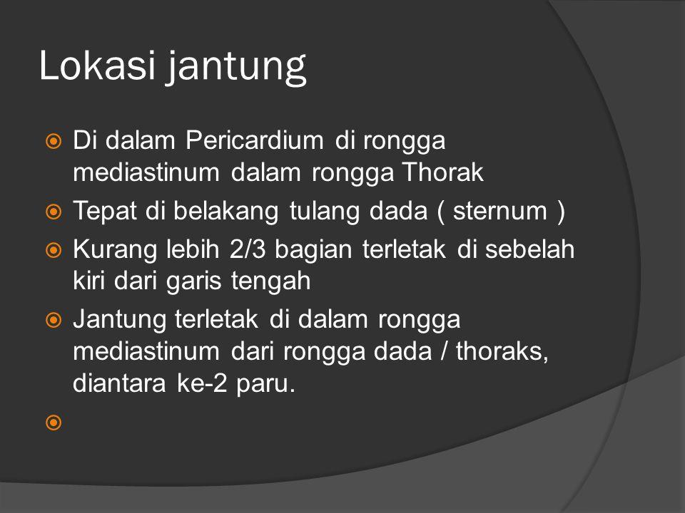 Lokasi jantung Di dalam Pericardium di rongga mediastinum dalam rongga Thorak. Tepat di belakang tulang dada ( sternum )