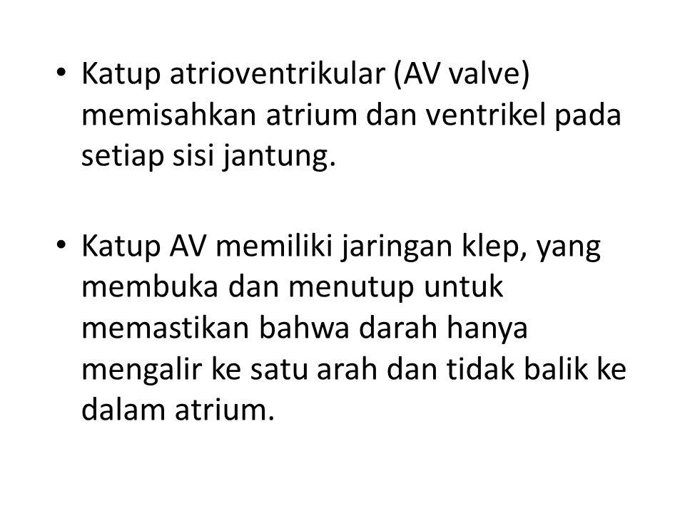 Katup atrioventrikular (AV valve) memisahkan atrium dan ventrikel pada setiap sisi jantung.