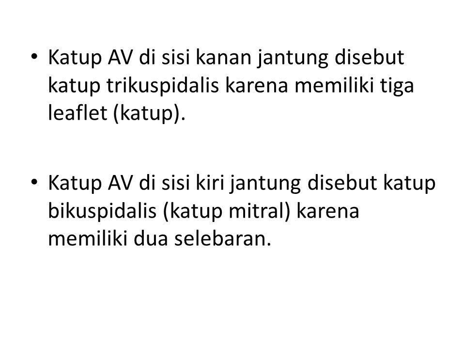 Katup AV di sisi kanan jantung disebut katup trikuspidalis karena memiliki tiga leaflet (katup).