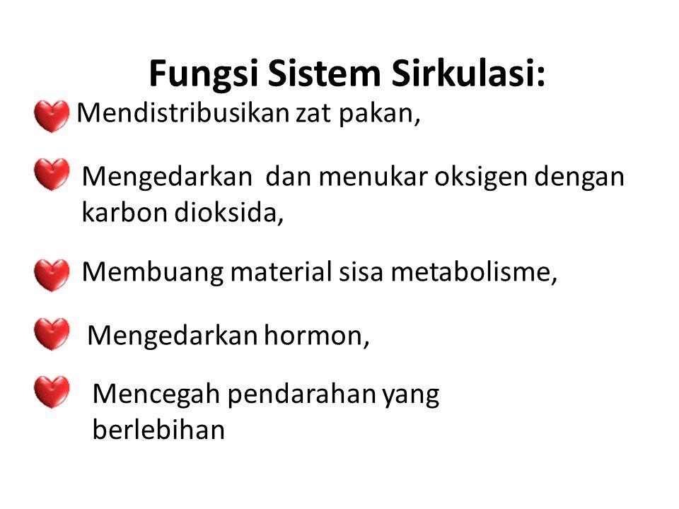 Fungsi Sistem Sirkulasi: