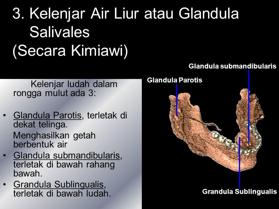3. Kelenjar Air Liur atau Glandula Salivales (Secara Kimiawi)