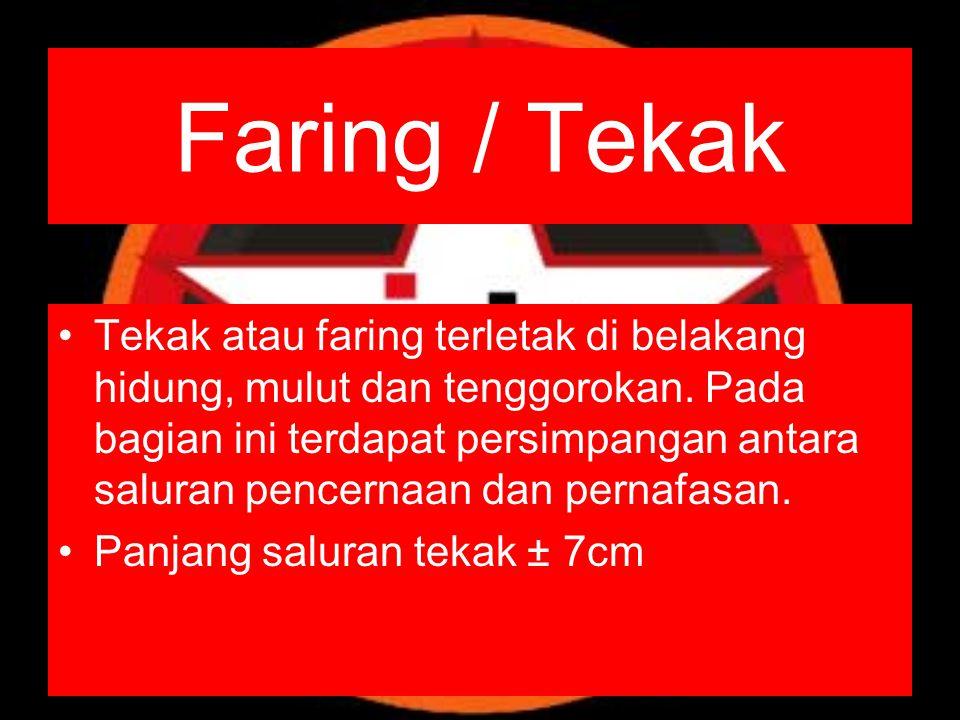 Faring / Tekak