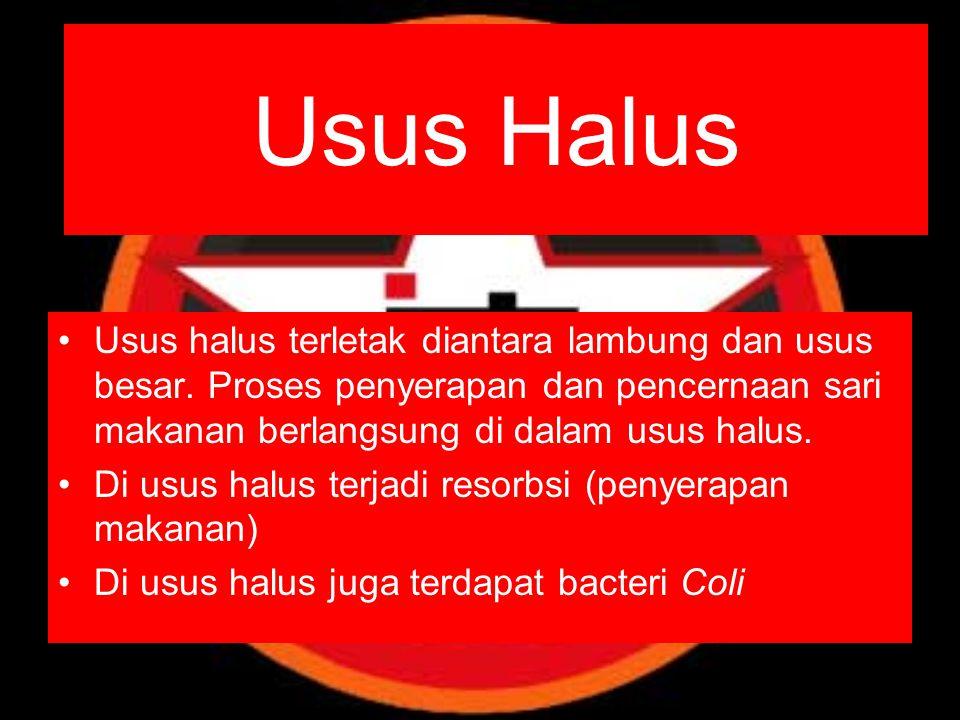 Usus Halus Usus halus terletak diantara lambung dan usus besar. Proses penyerapan dan pencernaan sari makanan berlangsung di dalam usus halus.