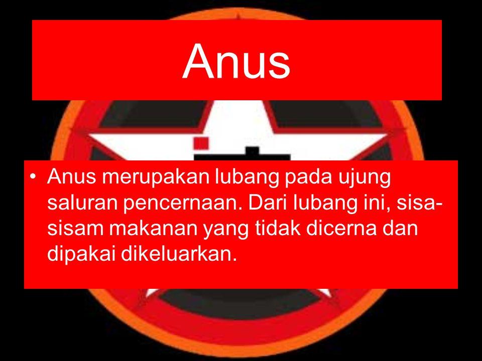 Anus Anus merupakan lubang pada ujung saluran pencernaan.