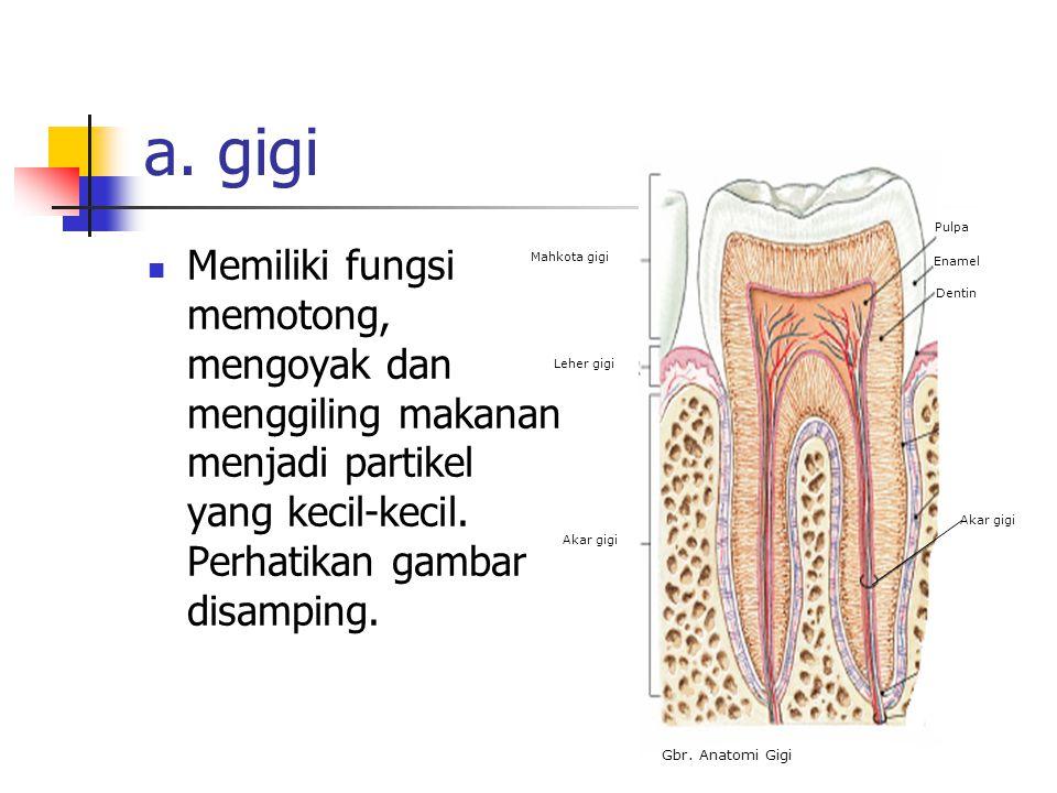 a. gigi Mahkota gigi. Leher gigi. Akar gigi. Pulpa. Enamel. Dentin. Gbr. Anatomi Gigi.
