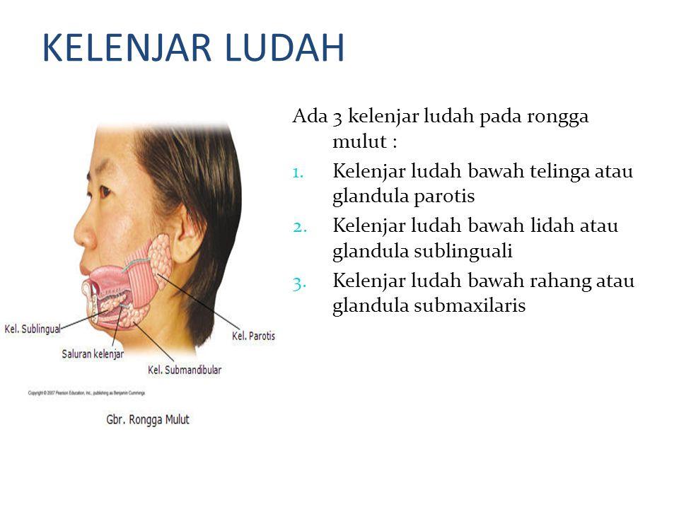 KELENJAR LUDAH Ada 3 kelenjar ludah pada rongga mulut :