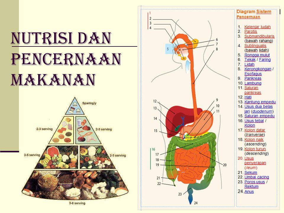 Nutrisi dan Pencernaan makanan