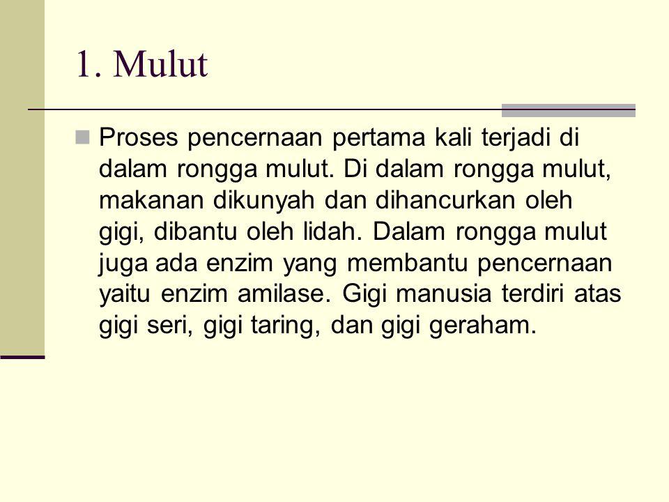 1. Mulut