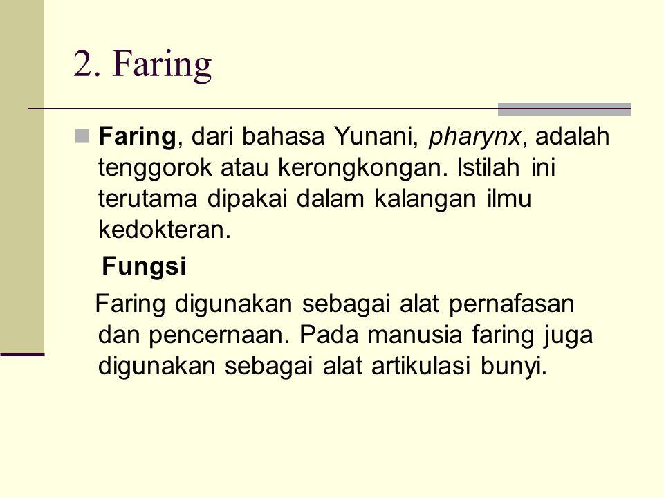 2. Faring Faring, dari bahasa Yunani, pharynx, adalah tenggorok atau kerongkongan. Istilah ini terutama dipakai dalam kalangan ilmu kedokteran.