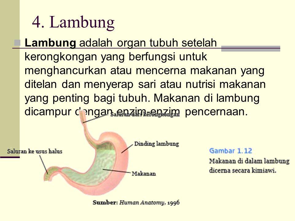 4. Lambung