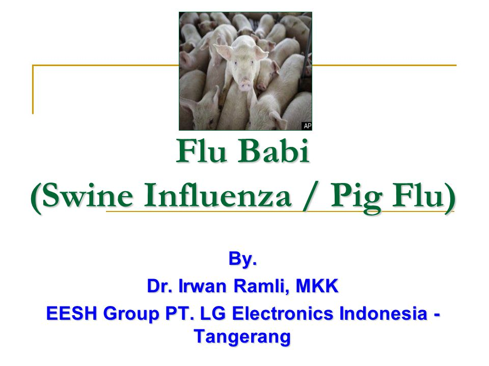 Flu Babi (Swine Influenza / Pig Flu)