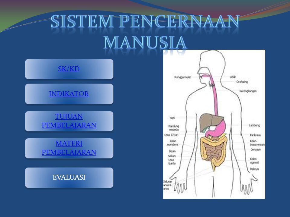 Sistem pencernaan manusia
