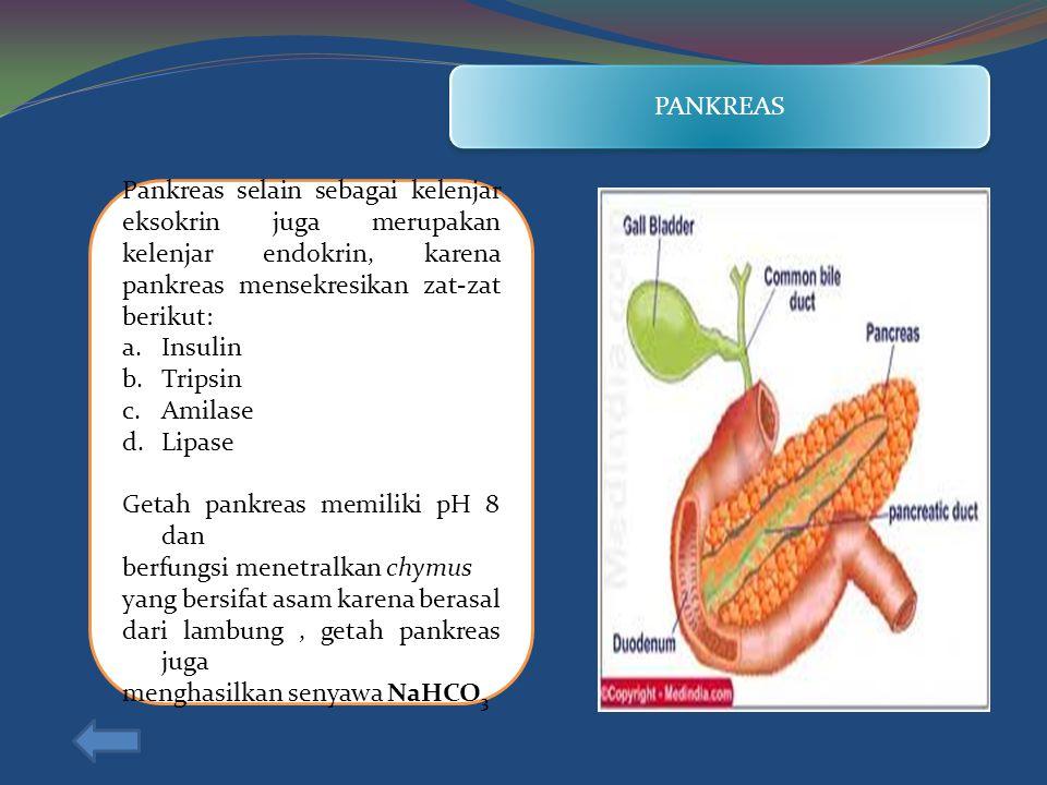 PANKREAS Pankreas selain sebagai kelenjar eksokrin juga merupakan kelenjar endokrin, karena pankreas mensekresikan zat-zat berikut: