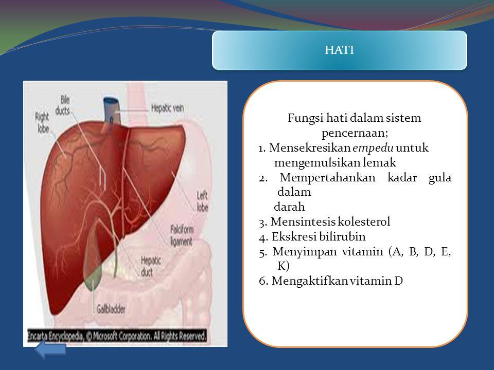 Fungsi hati dalam sistem pencernaan;