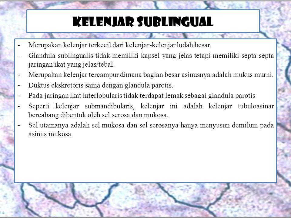 Kelenjar Sublingual Merupakan kelenjar terkecil dari kelenjar-kelenjar ludah besar.