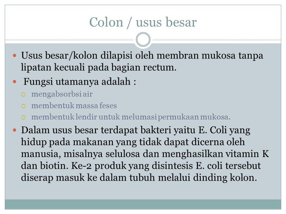 Colon / usus besar Usus besar/kolon dilapisi oleh membran mukosa tanpa lipatan kecuali pada bagian rectum.