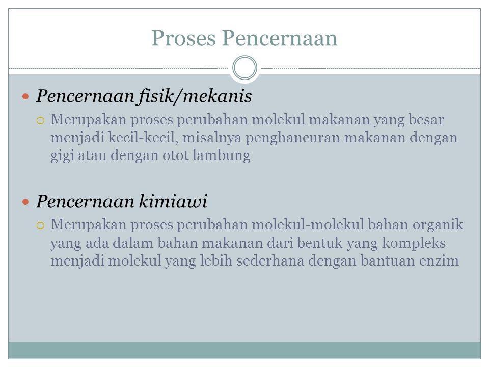 Proses Pencernaan Pencernaan fisik/mekanis Pencernaan kimiawi