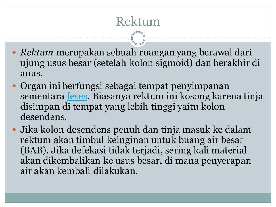Rektum Rektum merupakan sebuah ruangan yang berawal dari ujung usus besar (setelah kolon sigmoid) dan berakhir di anus.