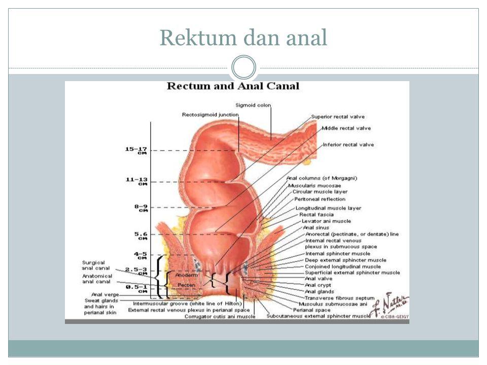 Rektum dan anal
