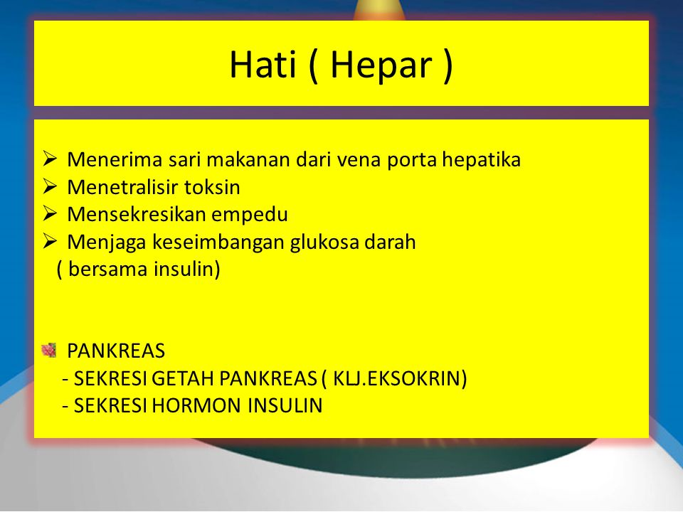 Hati ( Hepar ) Menerima sari makanan dari vena porta hepatika