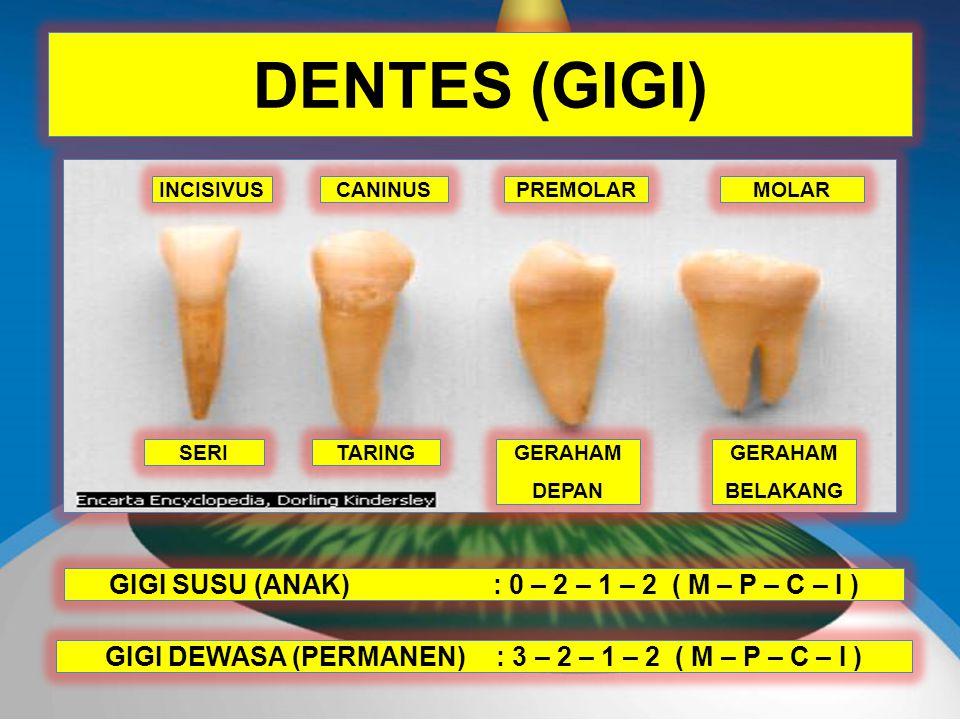 DENTES (GIGI) GIGI SUSU (ANAK) : 0 – 2 – 1 – 2 ( M – P – C – I )