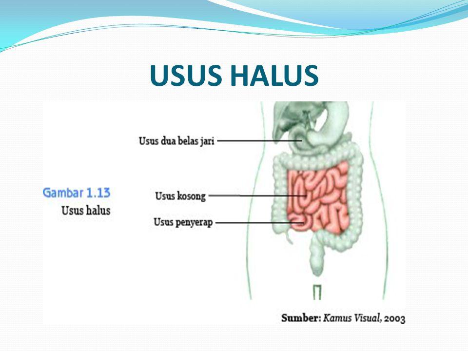 USUS HALUS
