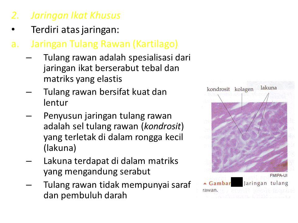 Terdiri atas jaringan: Jaringan Tulang Rawan (Kartilago)