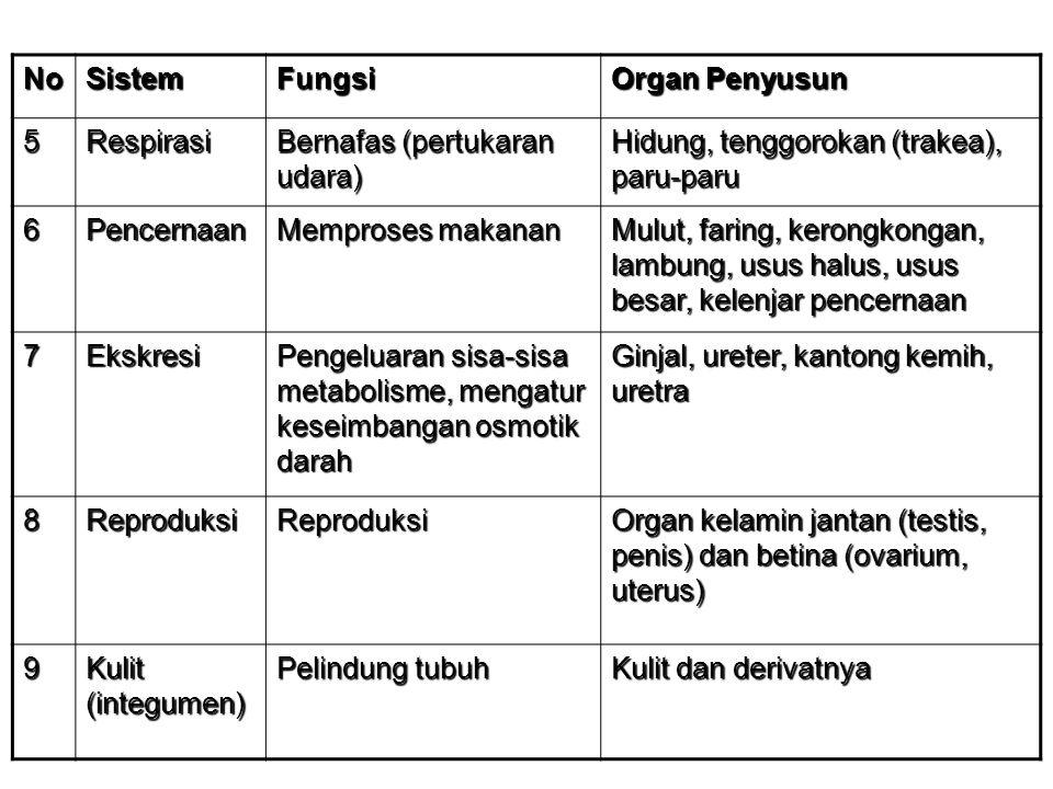 No Sistem. Fungsi. Organ Penyusun. 5. Respirasi. Bernafas (pertukaran udara) Hidung, tenggorokan (trakea), paru-paru.