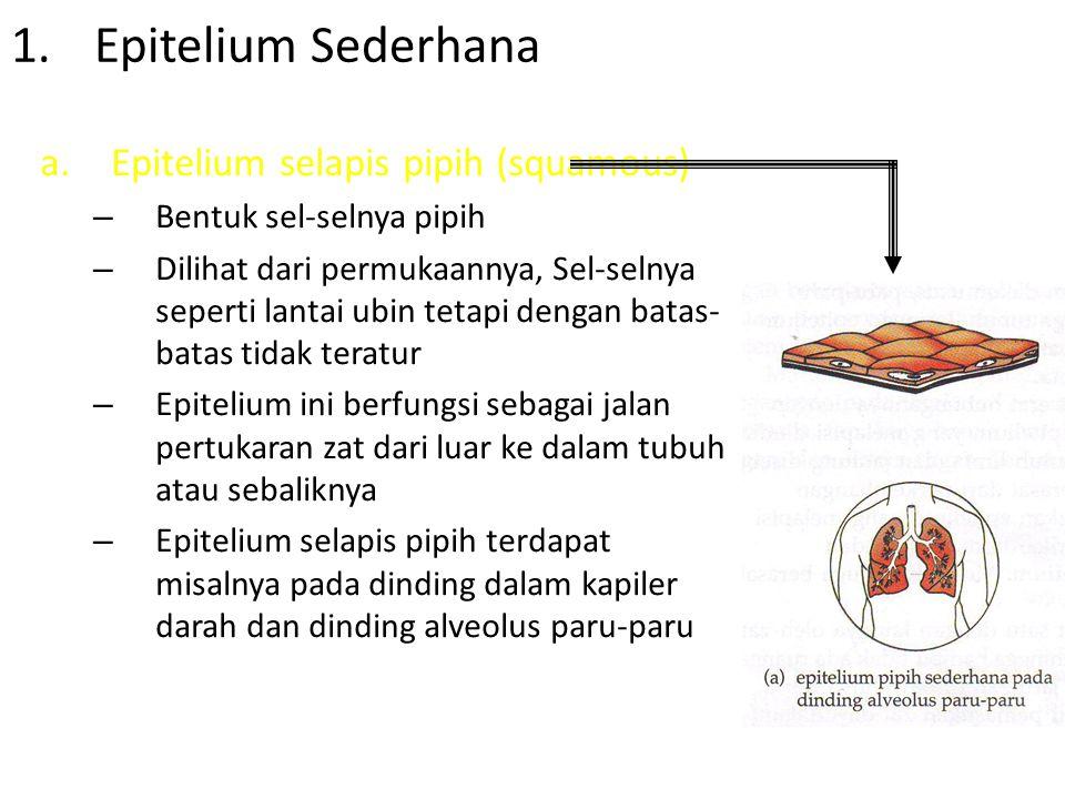 Epitelium Sederhana Epitelium selapis pipih (squamous)