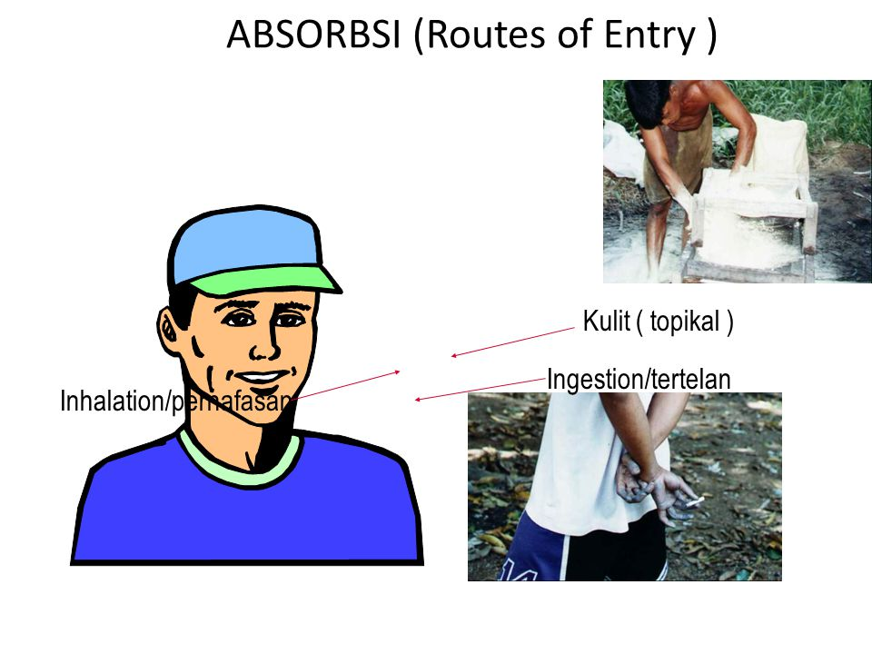 ABSORBSI (Routes of Entry )