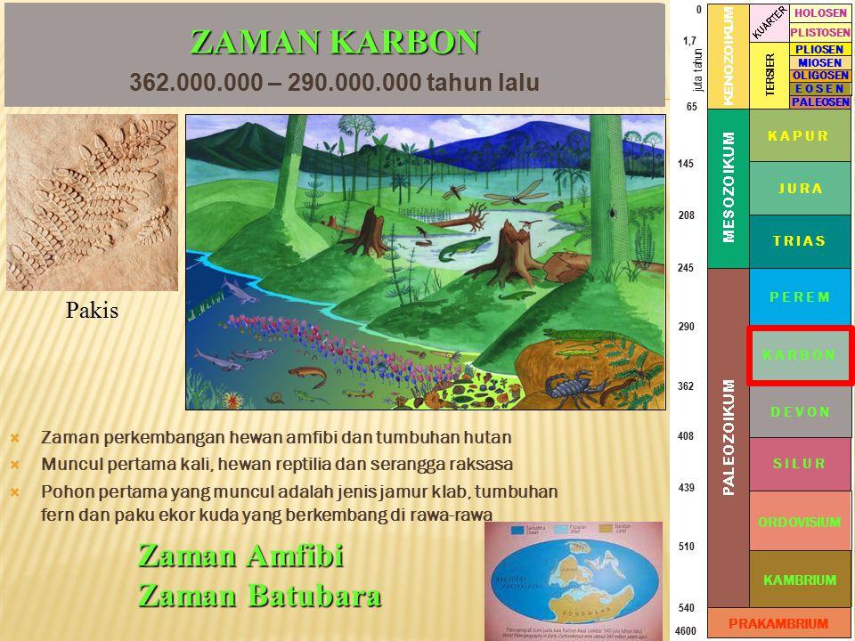 ZAMAN KARBON Zaman Amfibi Zaman Batubara
