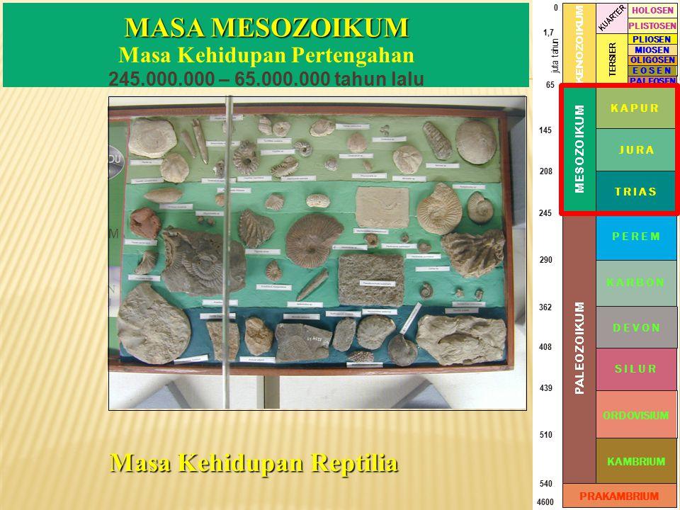 Masa Kehidupan Pertengahan 245.000.000 – 65.000.000 tahun lalu