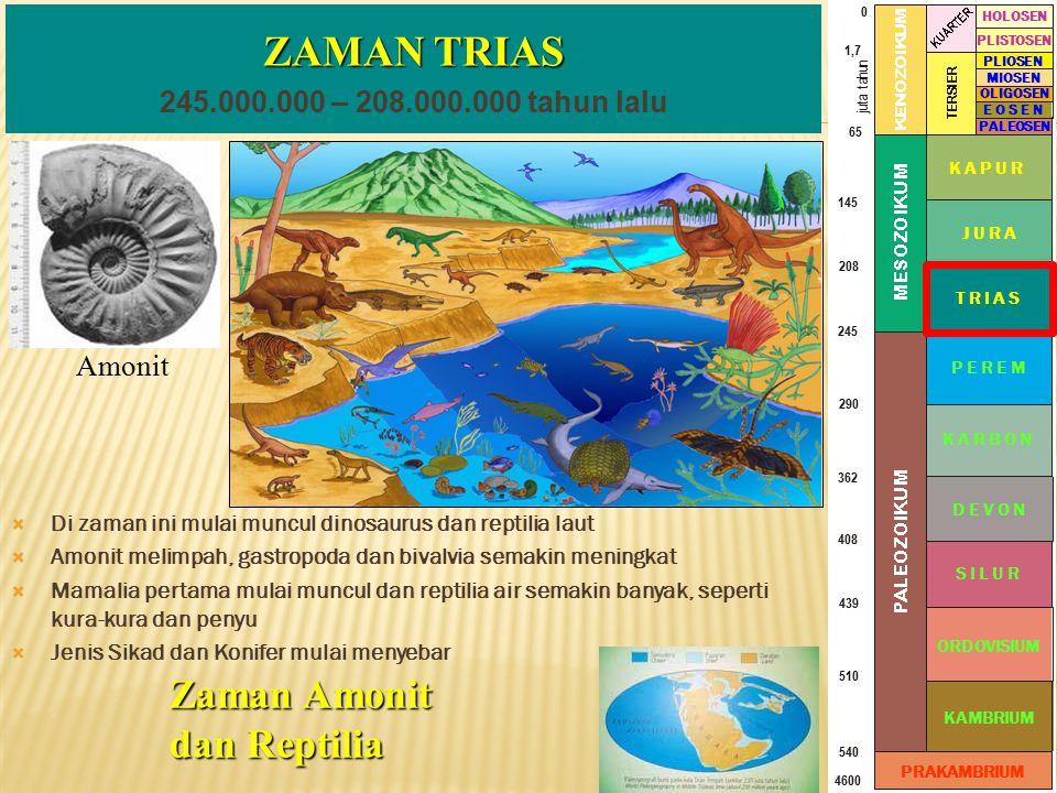 ZAMAN TRIAS Zaman Amonit dan Reptilia