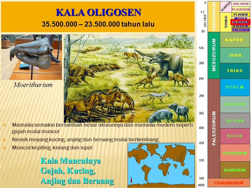 KALA OLIGOSEN Kala Munculnya Gajah, Kucing, Anjing dan Beruang