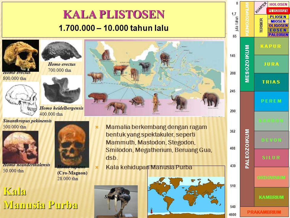 KALA PLISTOSEN Kala Manusia Purba 1.700.000 – 10.000 tahun lalu