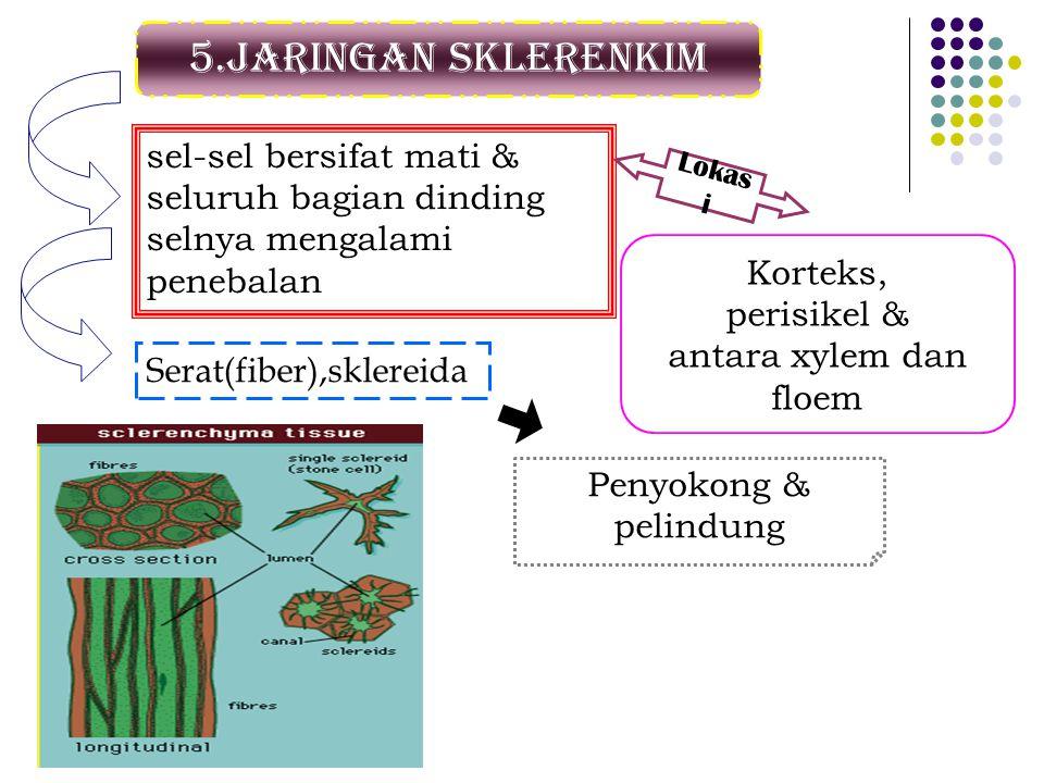 5.Jaringan sklerenkim sel-sel bersifat mati & seluruh bagian dinding