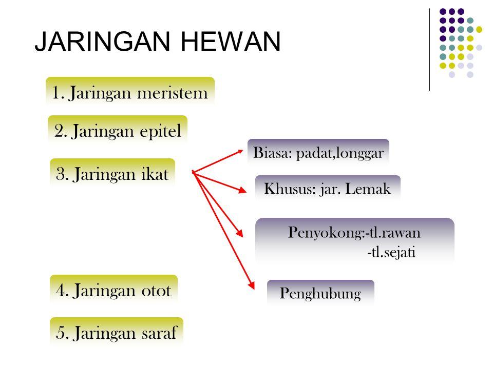JARINGAN HEWAN 1. Jaringan meristem 2. Jaringan epitel