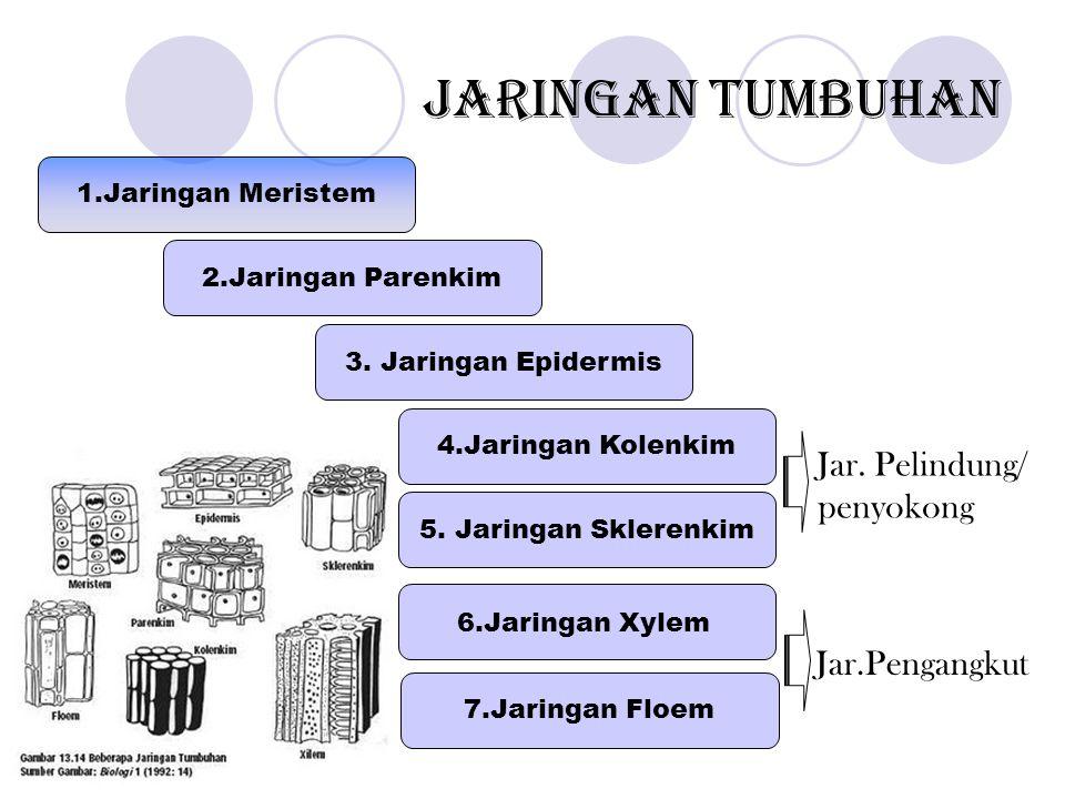 Jaringan Tumbuhan Jar. Pelindung/ penyokong Jar.Pengangkut