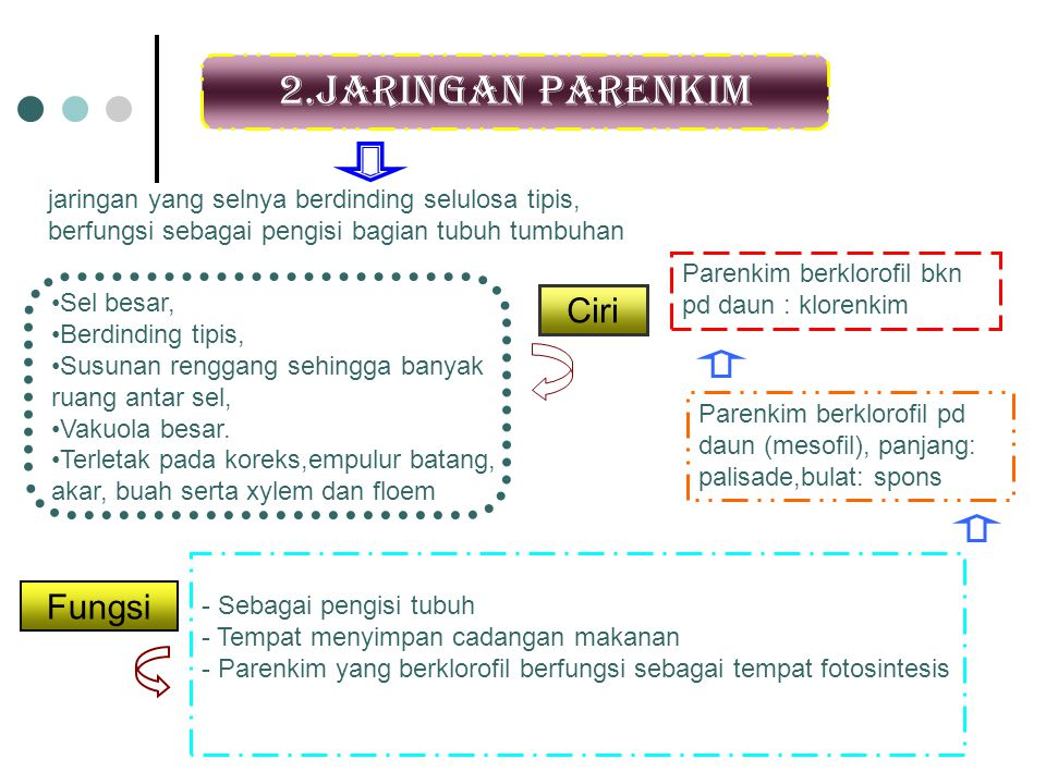 2.Jaringan parenkim Ciri Fungsi