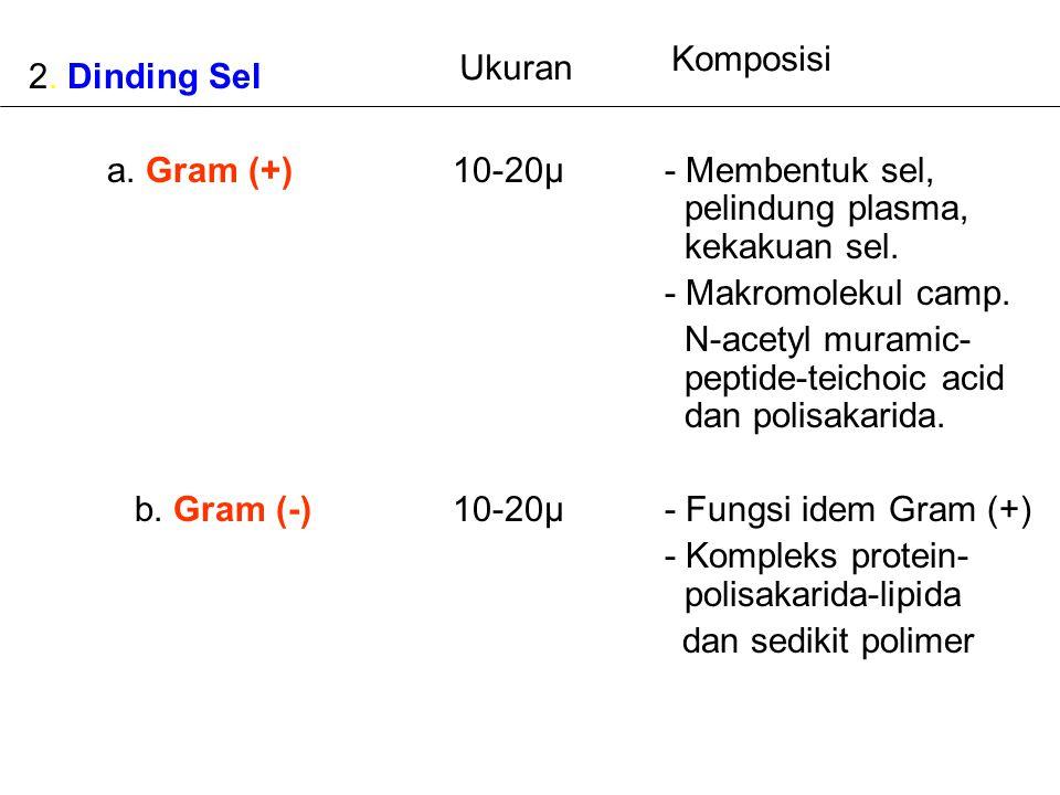 Komposisi Ukuran. 2. Dinding Sel. a. Gram (+) 10-20µ - Membentuk sel, pelindung plasma, kekakuan sel.