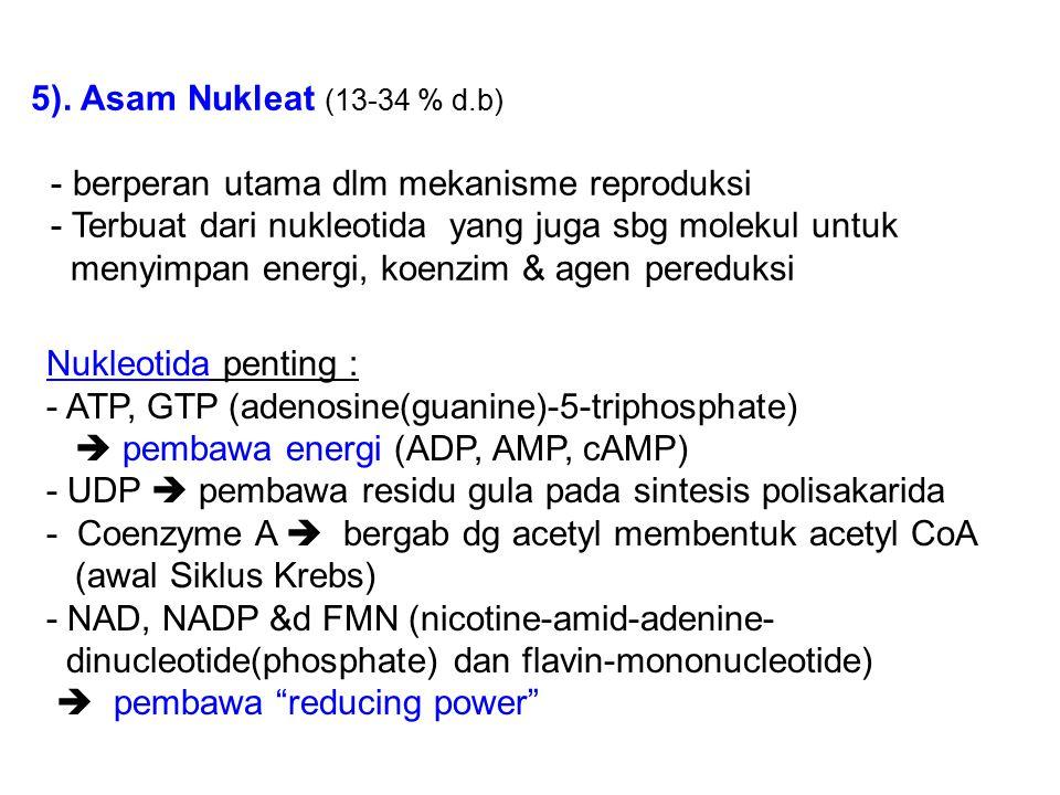 5). Asam Nukleat (13-34 % d.b) - berperan utama dlm mekanisme reproduksi. - Terbuat dari nukleotida yang juga sbg molekul untuk.